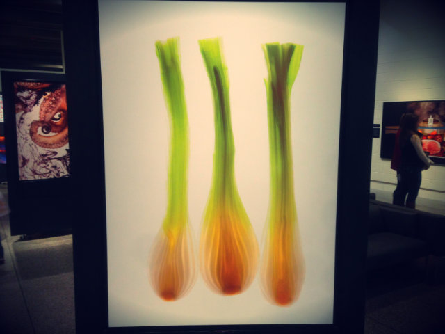 Photographies de Modernist Cuisine @MOS Boston