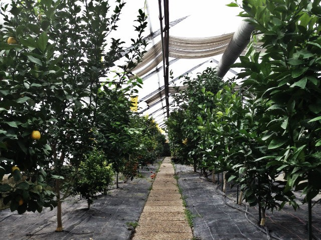 Le jardin aux dizaines de variétés d'agrumes de Niels Rodin
